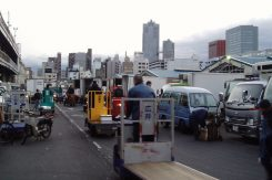 Tsukiji Fish Market At Dawn